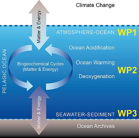 This figure schematically illustrates the marine water column (pelagic ocean) with its sediment and atmospheric interfaces. Topic 2 WPs focus their research on processes at the two interfaces, integrating material fluxes and biochemical processes from the