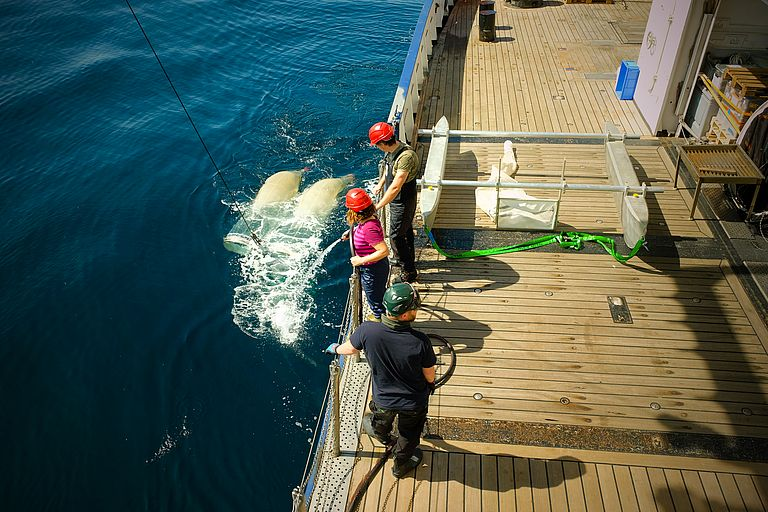 Using special nets, the team of expedition AL534/2 investigates the microplastic distribution off the coast of Western Europe. Photo: Expedition team AL534/2