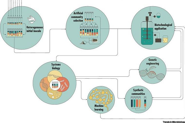 A Roadmap for Harnessing Artificial Community Selection for Microbial Bioremediation of Pollutants. Graphic from Borchert, Hammerschmidt, Hentschel, Deines (2021), Trends in Microbiology