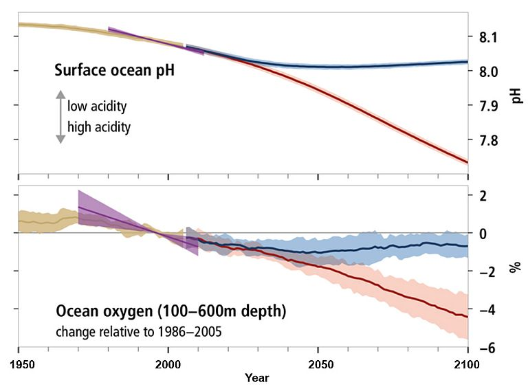 Changes in ocean surface pH and ocean oxygen content since 1950 and future projections. Source: IPCC SROOC