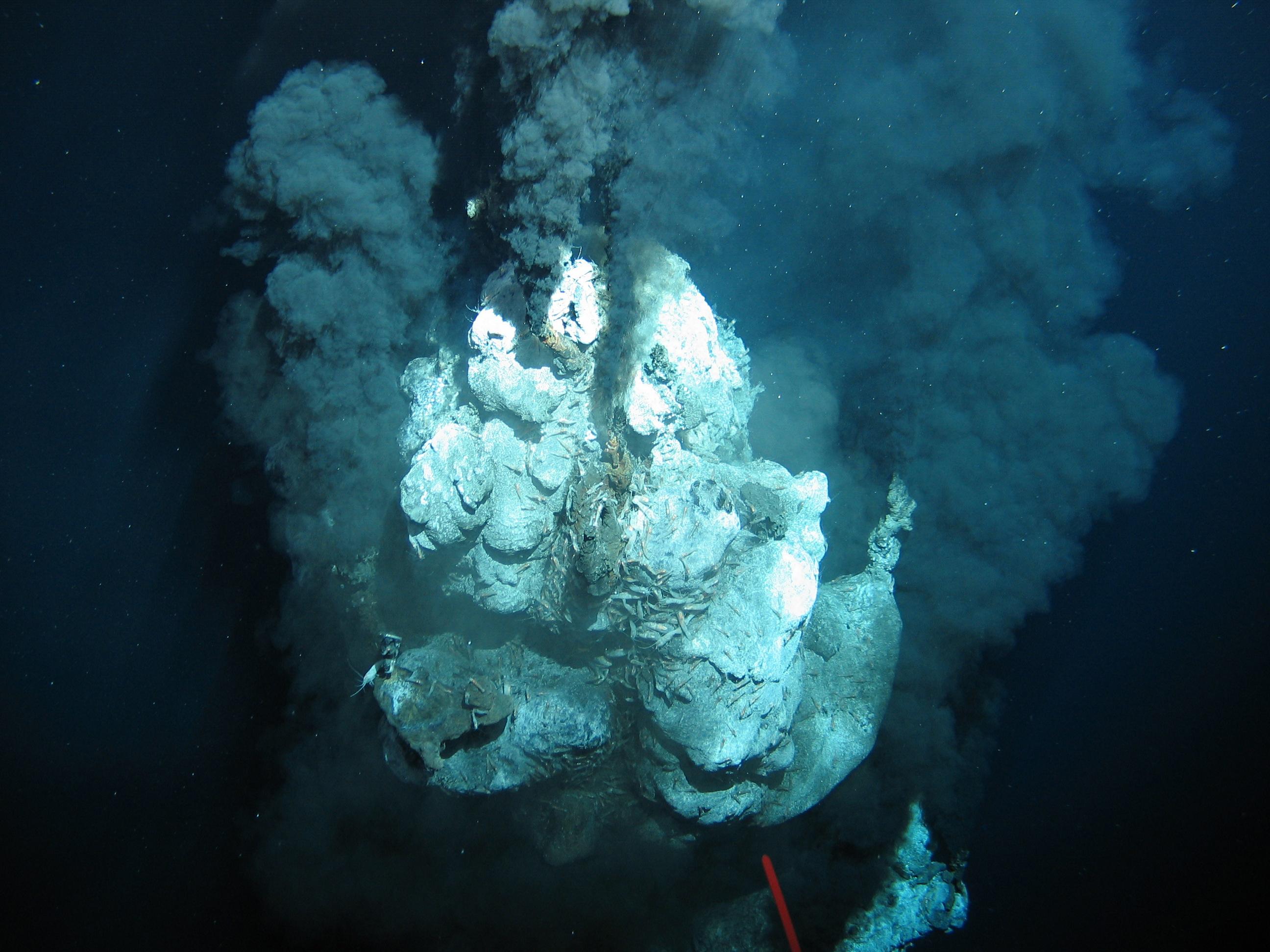 Bildergebnis für geomar tiefsee